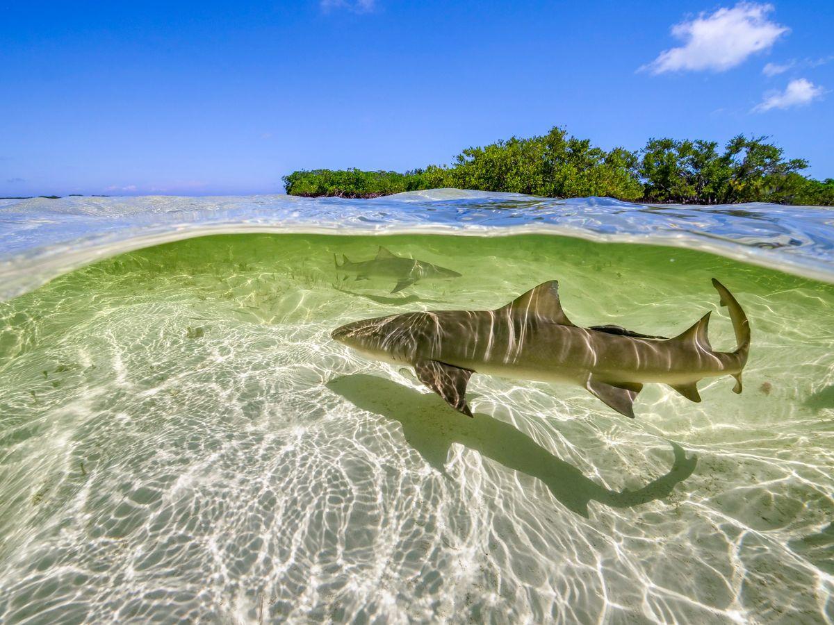 perfect planet haai